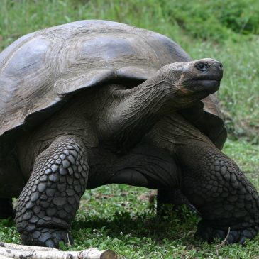 Galapagos Conservation Trust update