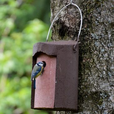 RSPB Big Garden Birdwatch 2017 – Results
