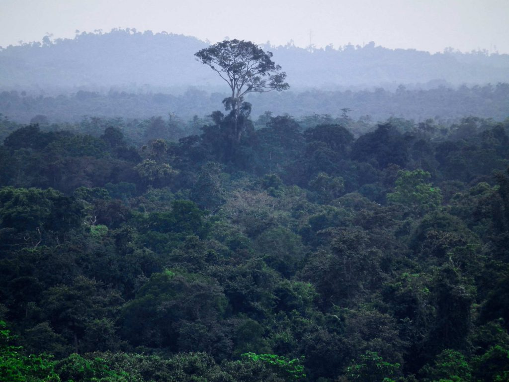 Steve Backshall and Helen Glover race to save rainforest of the Lower Kinabatangan River