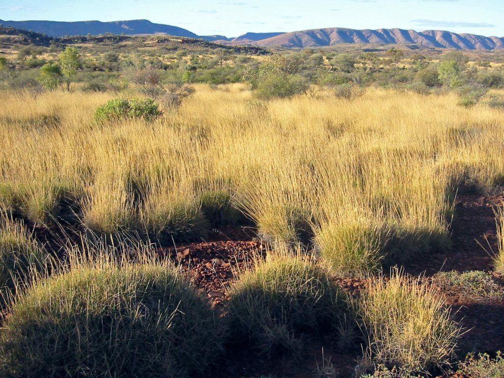 Spinifex savanna Night Parrots talk: Wildlife