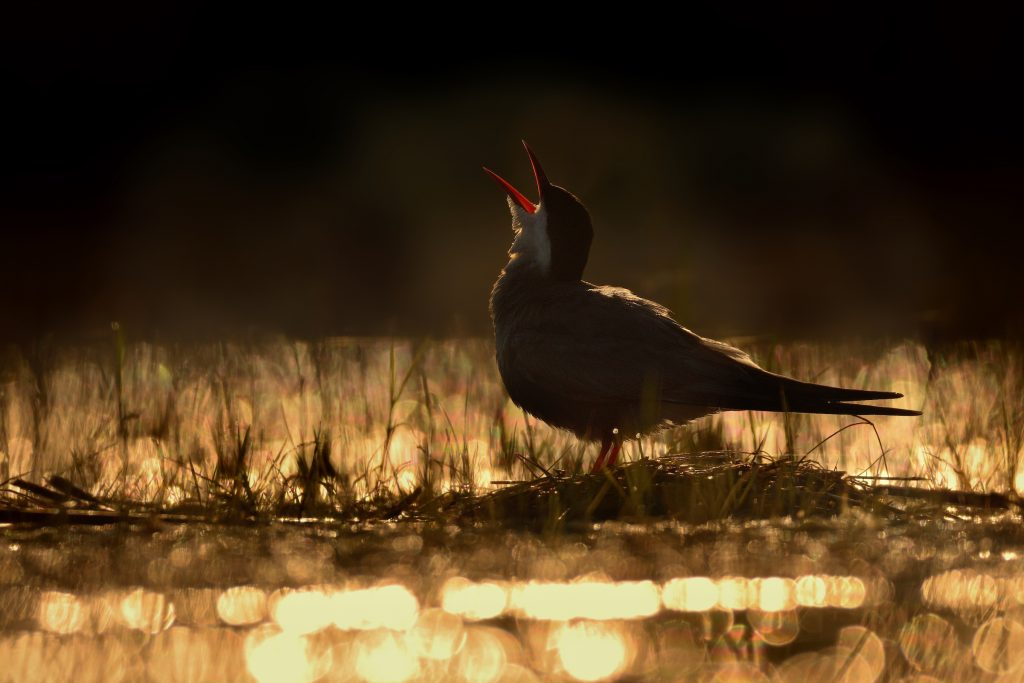 BPOTY - Young Bird Photographer of the Year