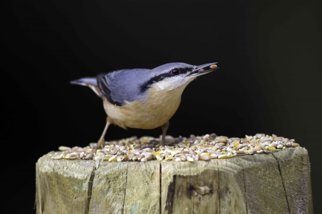 BBS 2016 Nuthatches increasing