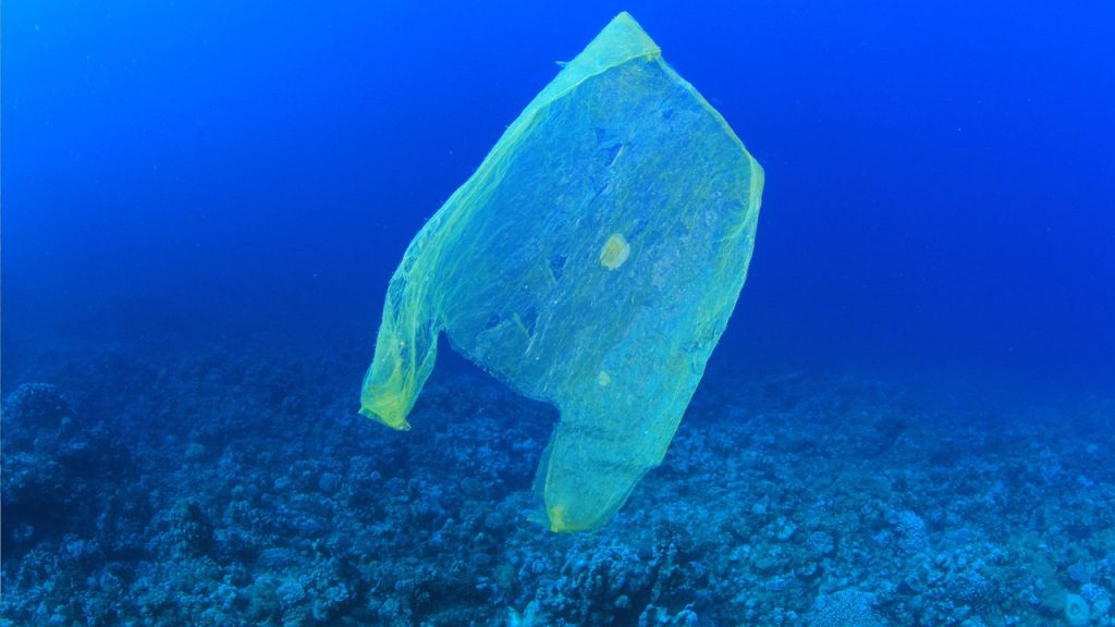 Plastic bags a threat to Galapagos wildlife