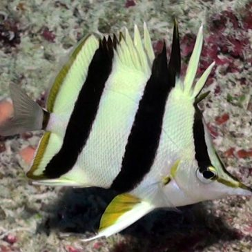 New fish discovered in the twilight zone