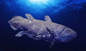 Coelacanth one of the inspirations behind talk: Widllife