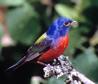 Lighting change safeguards birds