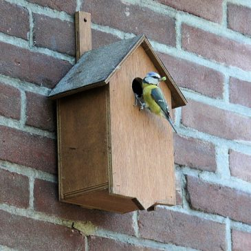 BTO National Nest Box Week; a lifeline for UK's nesting birds