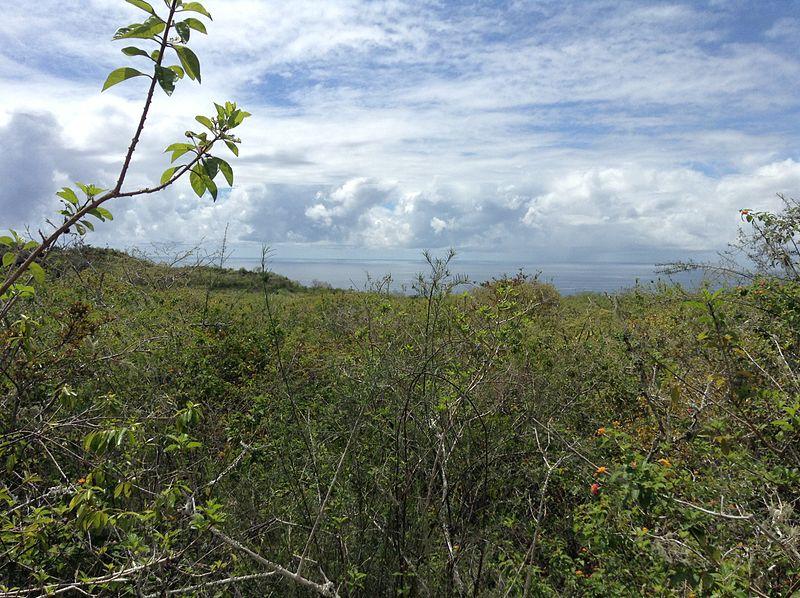 Galapagos highlands World Water Day talk: Wildlife