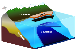 Upwelling has imact on whale sharks