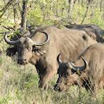 Snapshot Safari link
