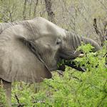 African wildlife - africam link