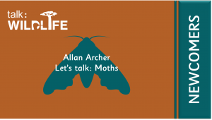 Wildlife Newcomers - Let's talk: Moths